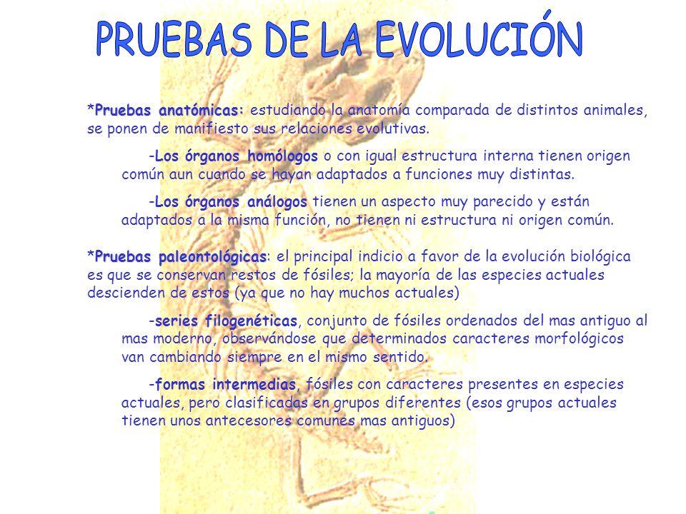 PRUEBAS DE LA EVOLUCIÓN