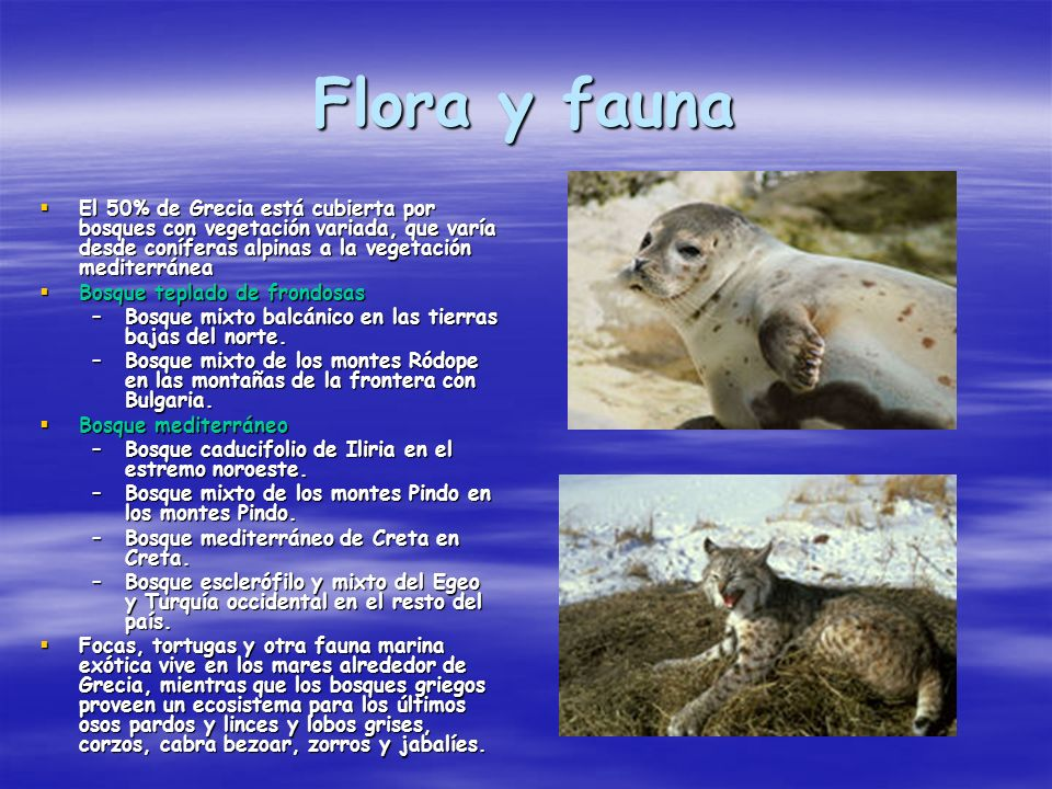 Flora y fauna El 50% de Grecia está cubierta por bosques con vegetación variada, que varía desde coníferas alpinas a la vegetación mediterránea.