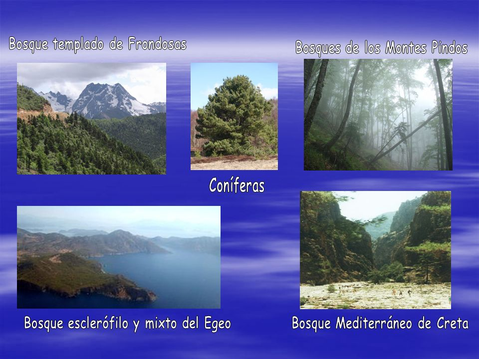 Bosque templado de Frondosas Bosques de los Montes Pindos