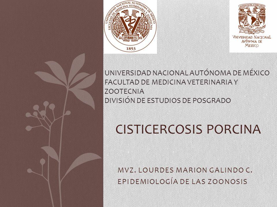Cisticercosis porcina