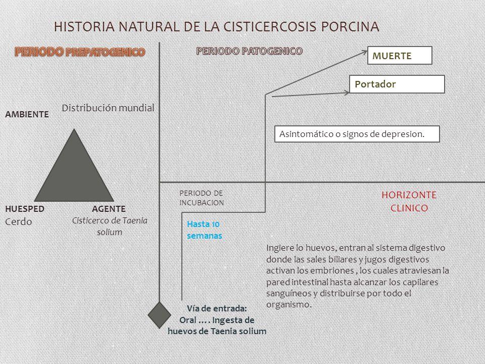 HISTORIA NATURAL DE LA CISTICERCOSIS PORCINA