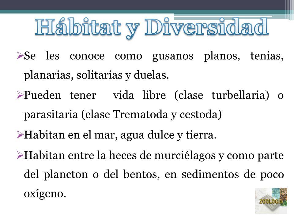 Hábitat y Diversidad Se les conoce como gusanos planos, tenias, planarias, solitarias y duelas.
