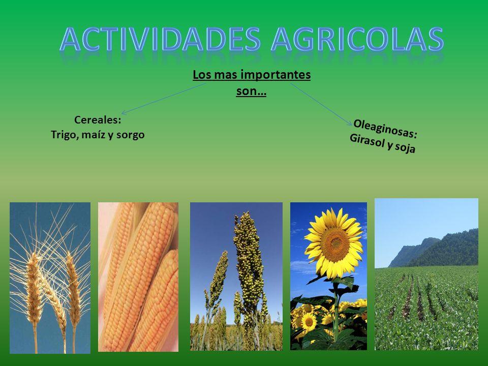 actividades agricolas Los mas importantes son…
