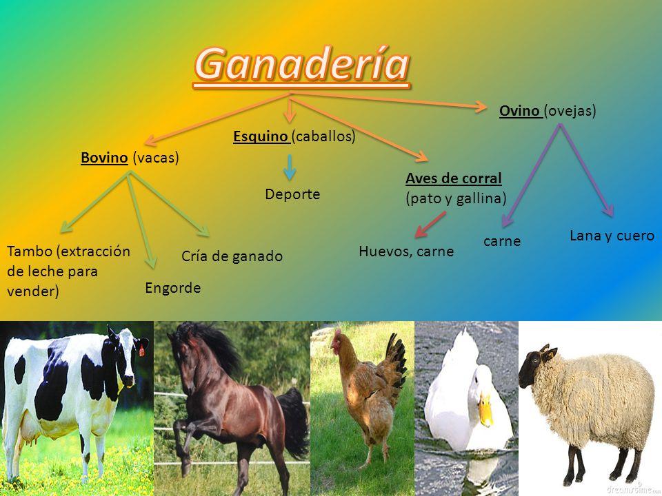 Ganadería Ovino (ovejas) Esquino (caballos) Bovino (vacas)