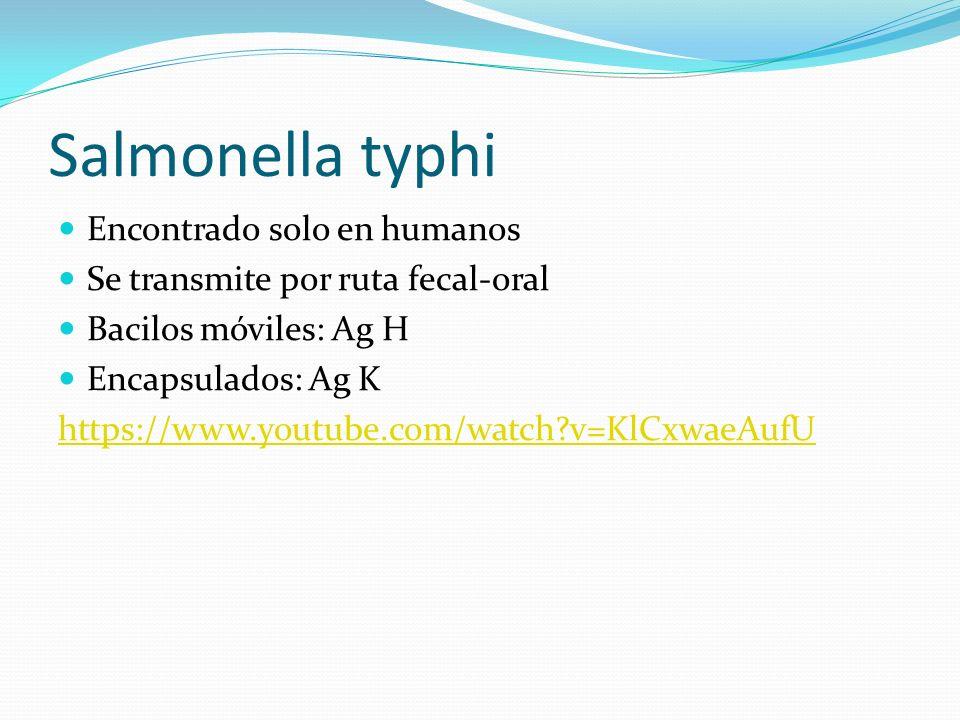 Salmonella typhi Encontrado solo en humanos