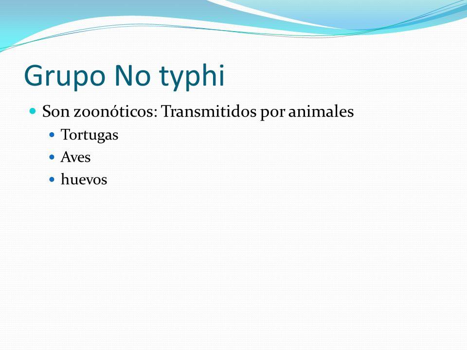 Grupo No typhi Son zoonóticos: Transmitidos por animales Tortugas Aves