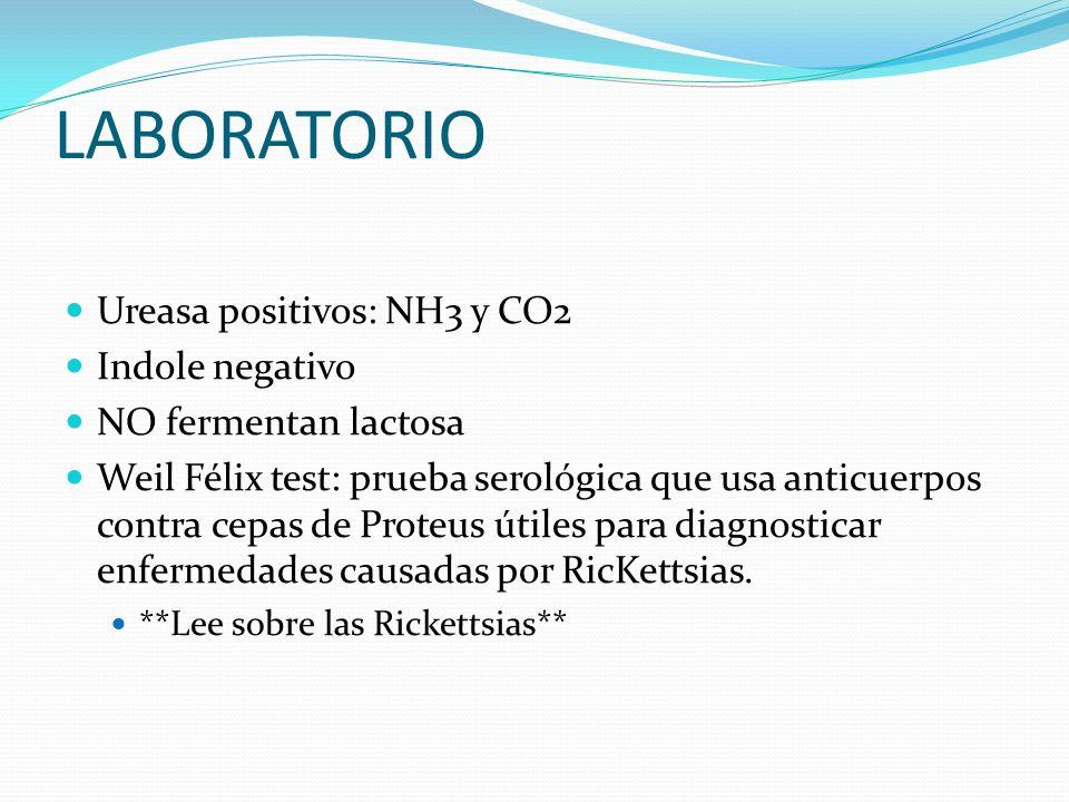 LABORATORIO Ureasa positivos: NH3 y CO2 Indole negativo