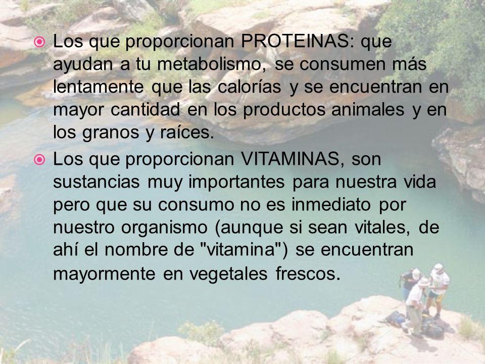 Los que proporcionan PROTEINAS: que ayudan a tu metabolismo, se consumen más lentamente que las calorías y se encuentran en mayor cantidad en los productos animales y en los granos y raíces.