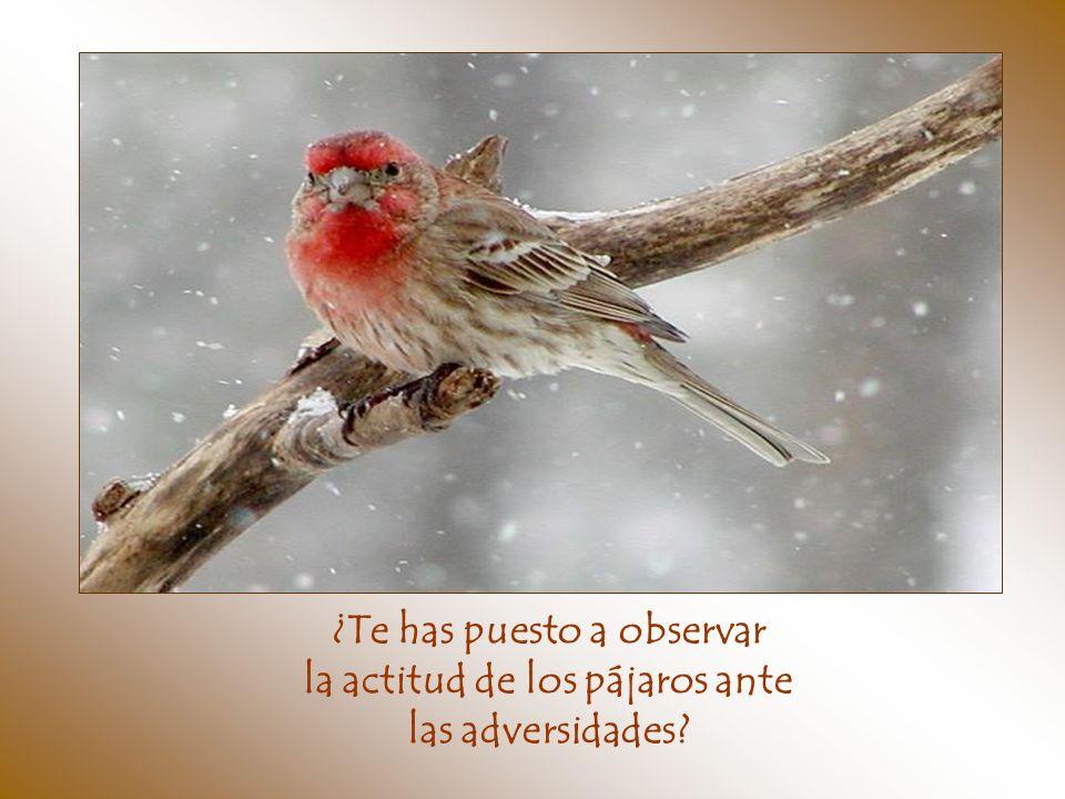 ¿Te has puesto a observar la actitud de los pájaros ante