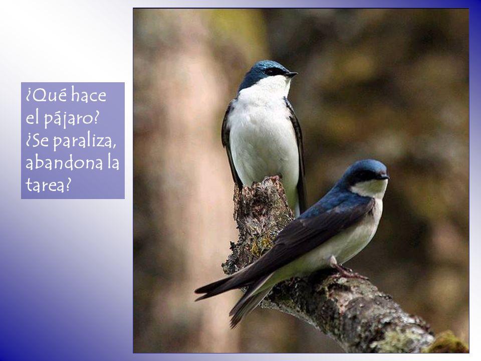 ¿Qué hace el pájaro ¿Se paraliza, abandona la tarea