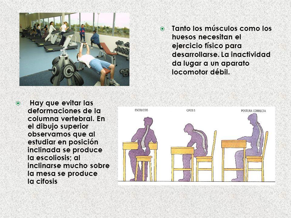 Tanto los músculos como los huesos necesitan el ejercicio físico para desarrollarse. La inactividad da lugar a un aparato locomotor débil.