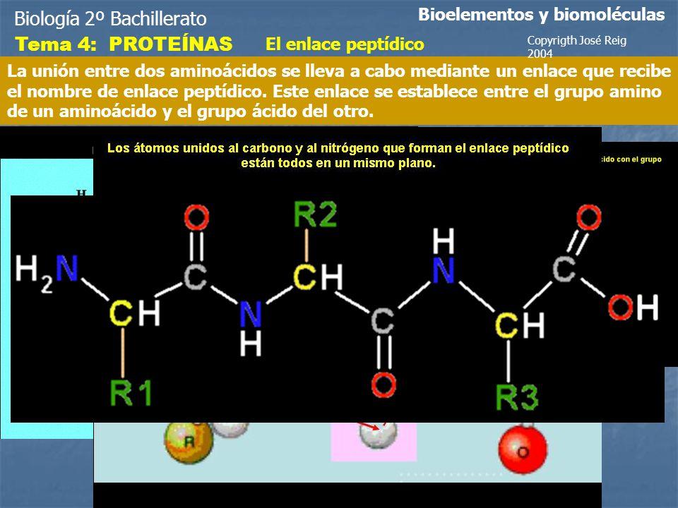 Biología 2º Bachillerato Tema 4: PROTEÍNAS