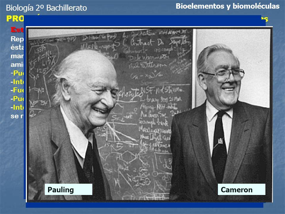 Biología 2º Bachillerato PROTEÍNAS