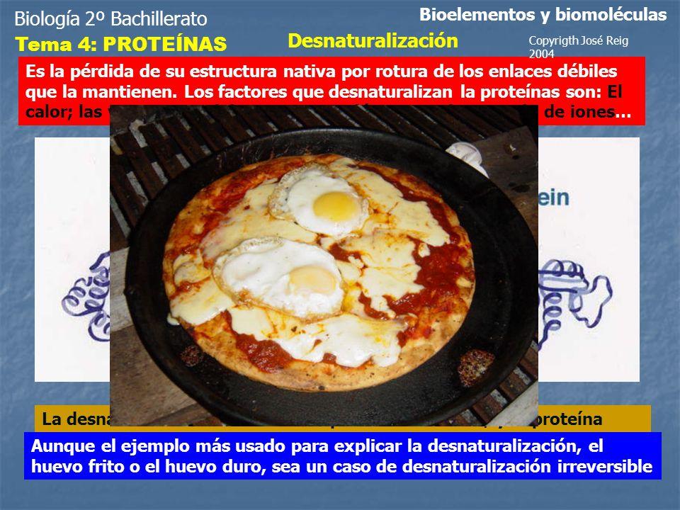 Biología 2º Bachillerato Desnaturalización Tema 4: PROTEÍNAS