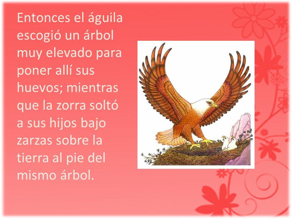 Entonces el águila escogió un árbol muy elevado para poner allí sus huevos; mientras que la zorra soltó a sus hijos bajo zarzas sobre la tierra al pie del mismo árbol.