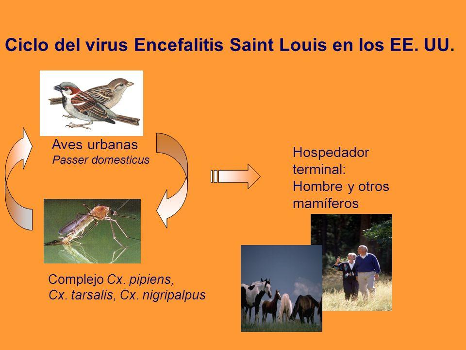 Ciclo del virus Encefalitis Saint Louis en los EE. UU.