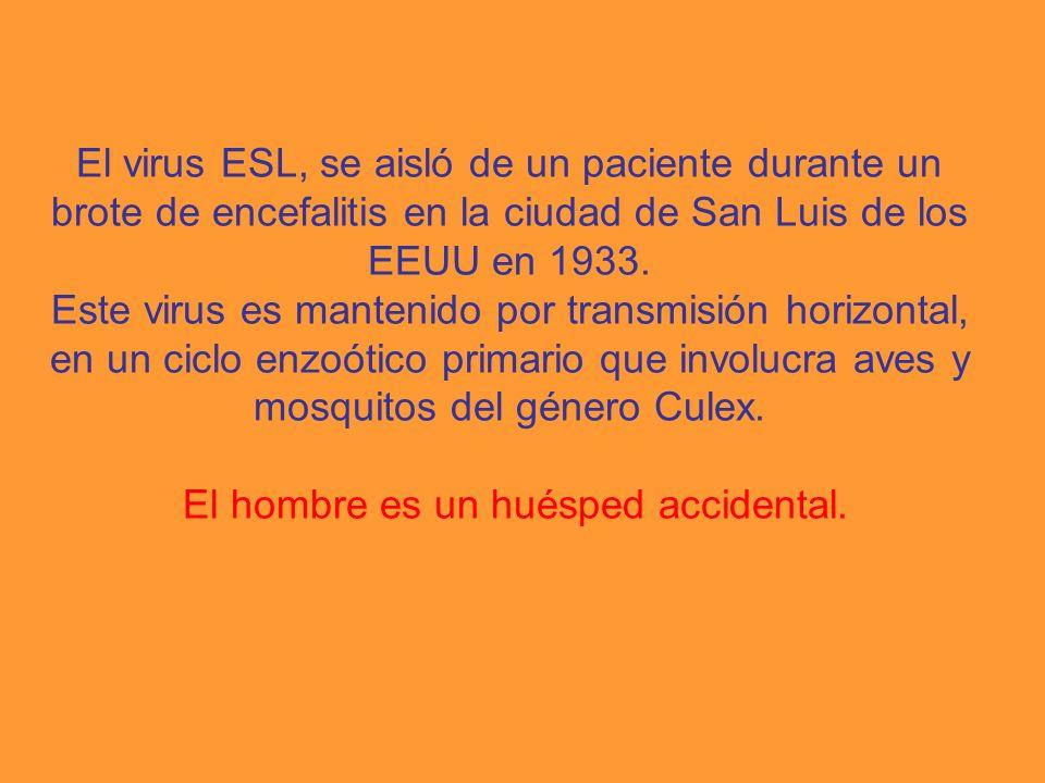 El virus ESL, se aisló de un paciente durante un brote de encefalitis en la ciudad de San Luis de los EEUU en 1933.