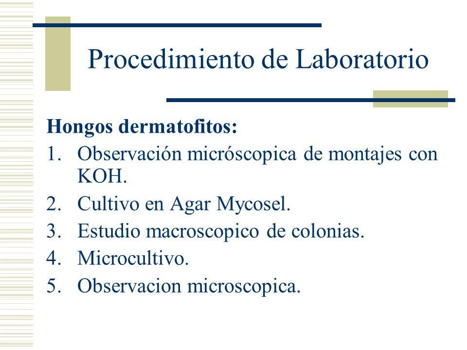 Procedimiento de Laboratorio