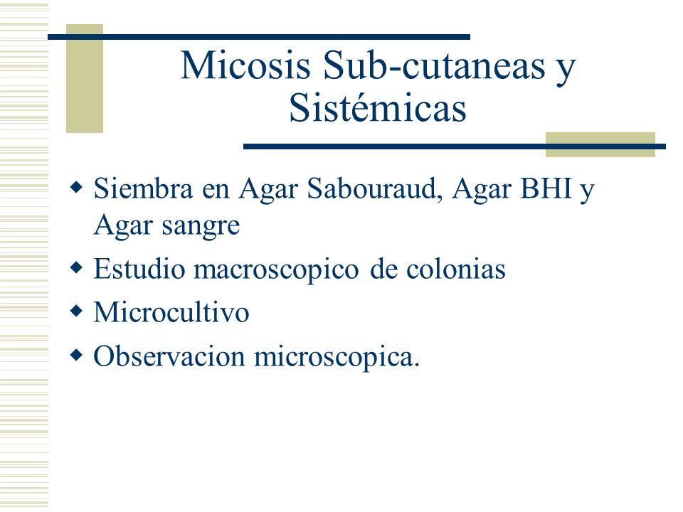 Micosis Sub-cutaneas y Sistémicas