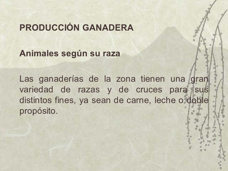 PRODUCCIÓN GANADERA Animales según su raza.