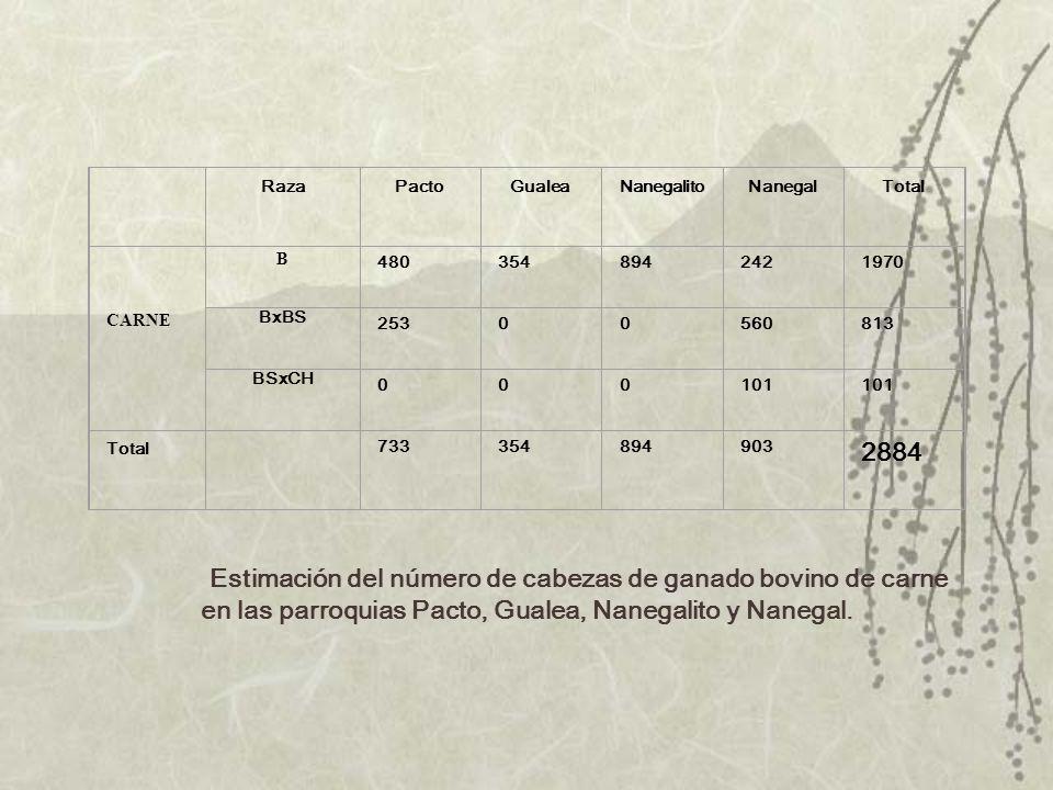 Raza. Pacto. Gualea. Nanegalito. Nanegal. Total. CARNE. B. 480. 354. 894. 242. 1970. BxBS. 253. 560.