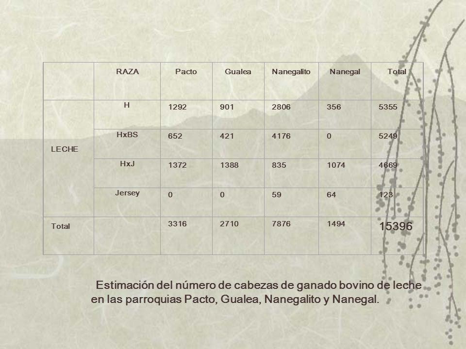 RAZA. Pacto. Gualea. Nanegalito. Nanegal. Total. LECHE. H. 1292. 901. 2806. 356. 5355.