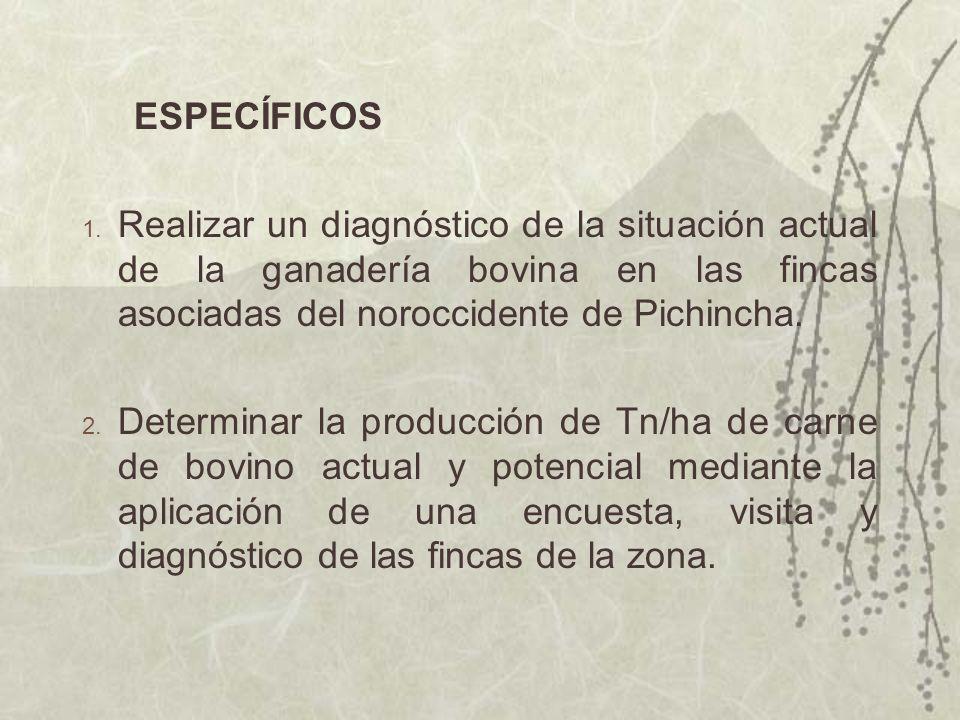 ESPECÍFICOS Realizar un diagnóstico de la situación actual de la ganadería bovina en las fincas asociadas del noroccidente de Pichincha.