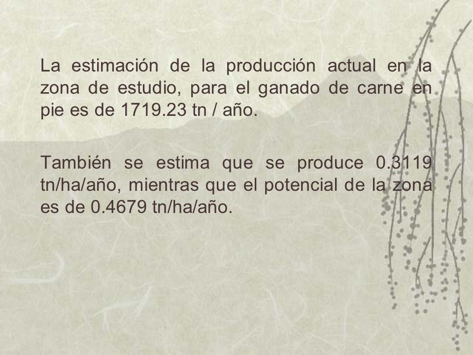 La estimación de la producción actual en la zona de estudio, para el ganado de carne en pie es de 1719.23 tn / año.