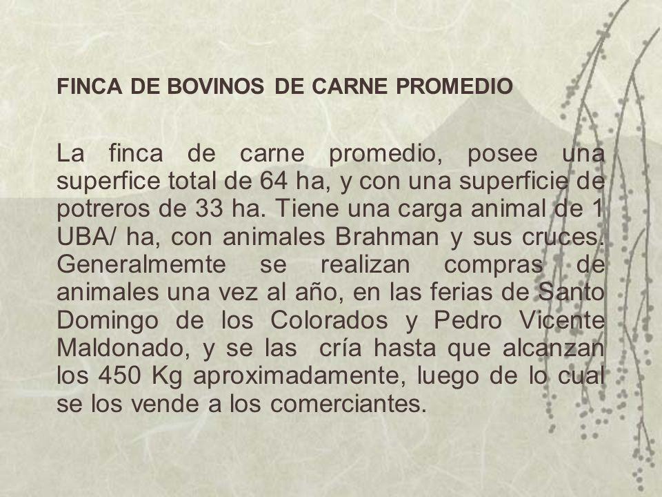 FINCA DE BOVINOS DE CARNE PROMEDIO