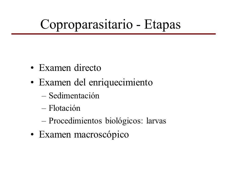 Coproparasitario - Etapas