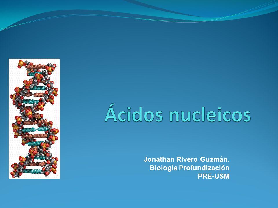 Ácidos nucleicos Jonathan Rivero Guzmán. Biología Profundización