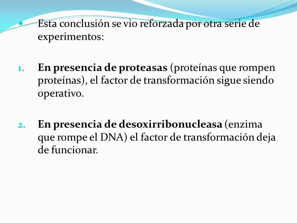 Esta conclusión se vio reforzada por otra serie de experimentos: