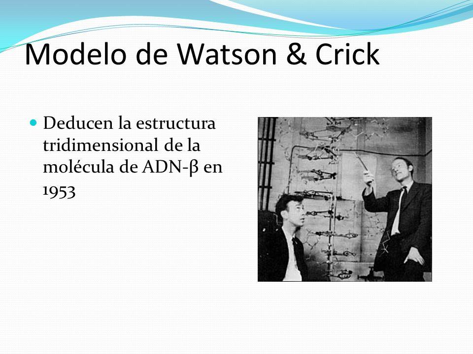 Modelo de Watson & Crick