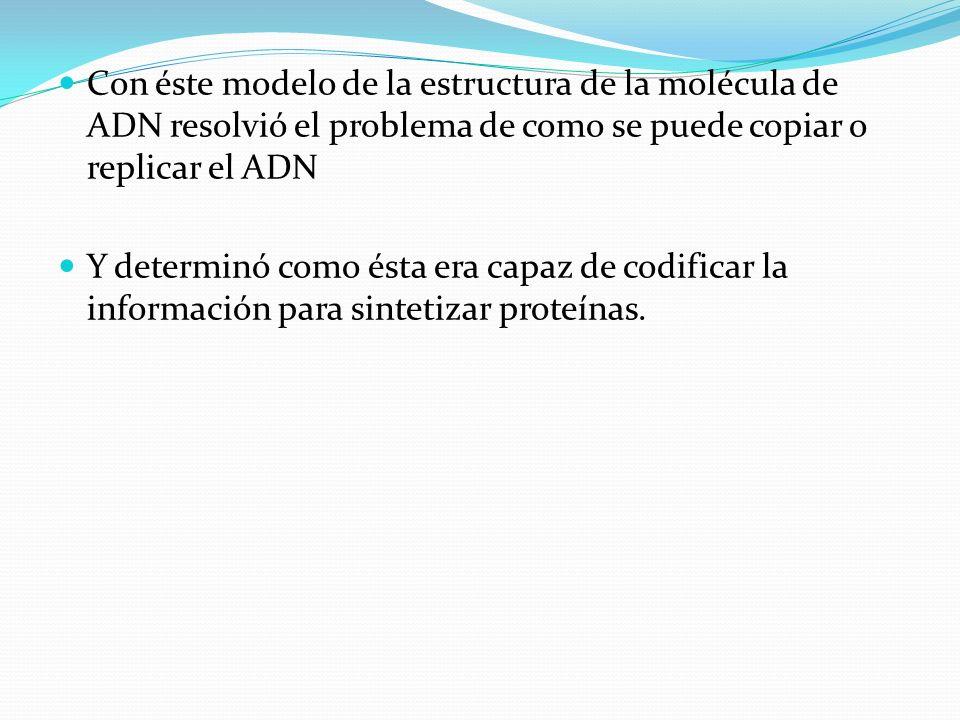 Con éste modelo de la estructura de la molécula de ADN resolvió el problema de como se puede copiar o replicar el ADN