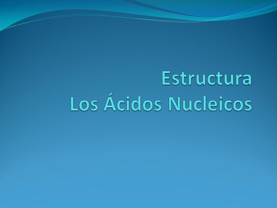Estructura Los Ácidos Nucleicos