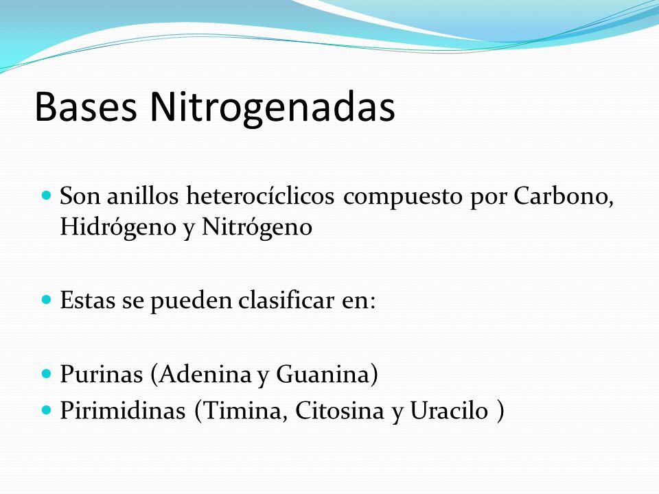 Bases Nitrogenadas Son anillos heterocíclicos compuesto por Carbono, Hidrógeno y Nitrógeno. Estas se pueden clasificar en: