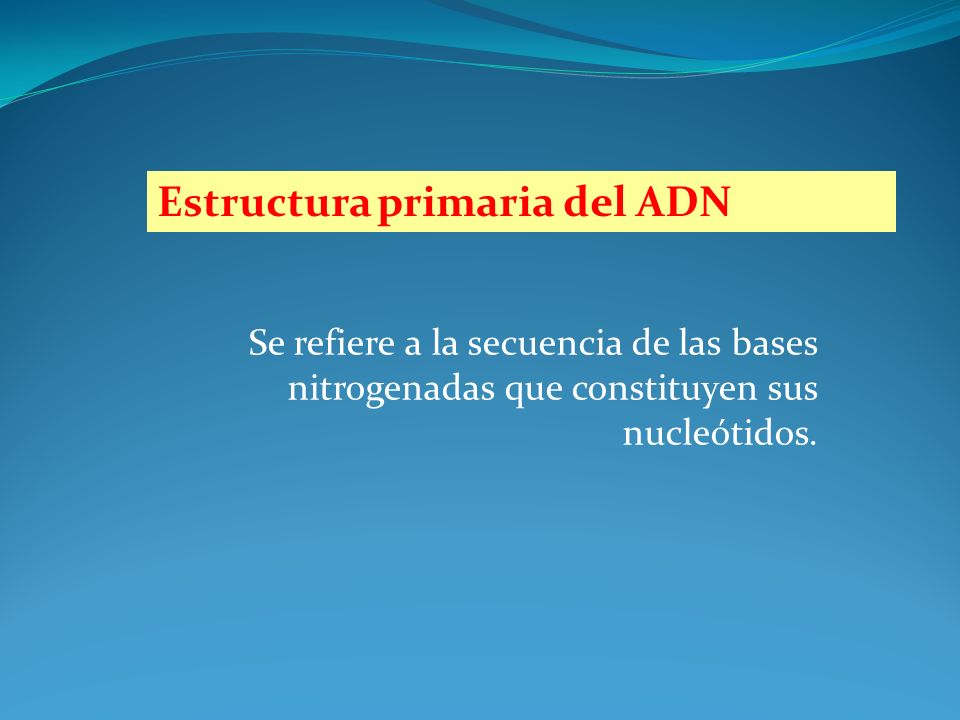 Estructura primaria del ADN