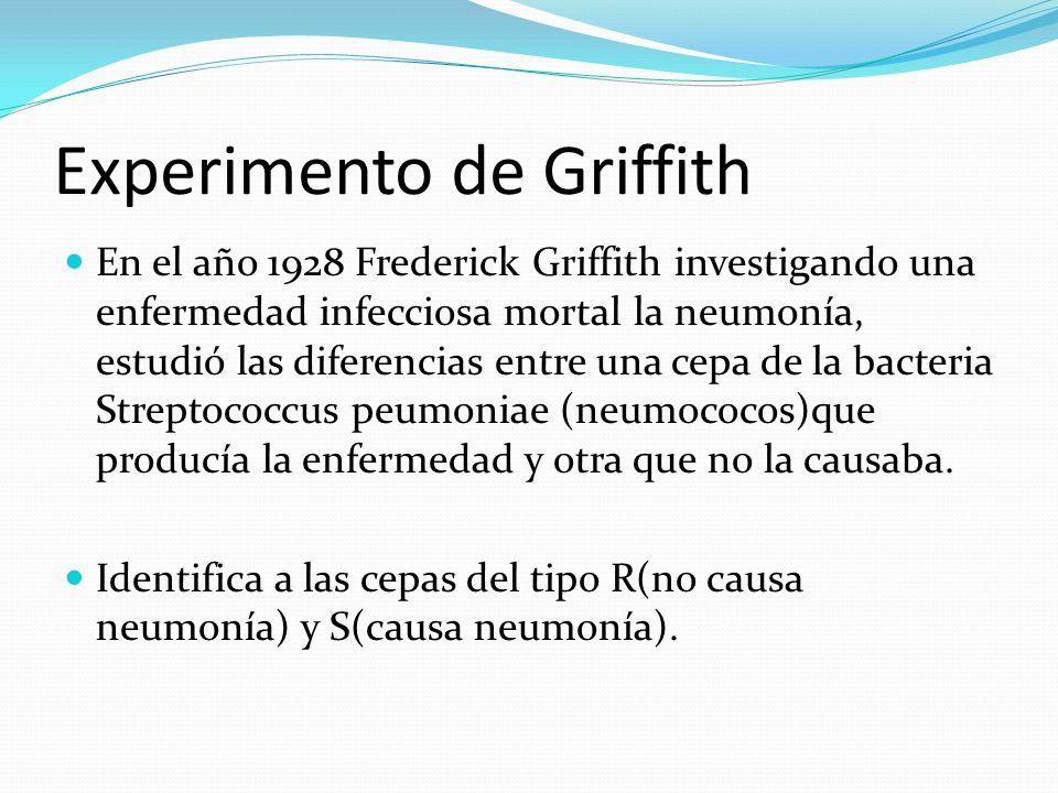 Experimento de Griffith