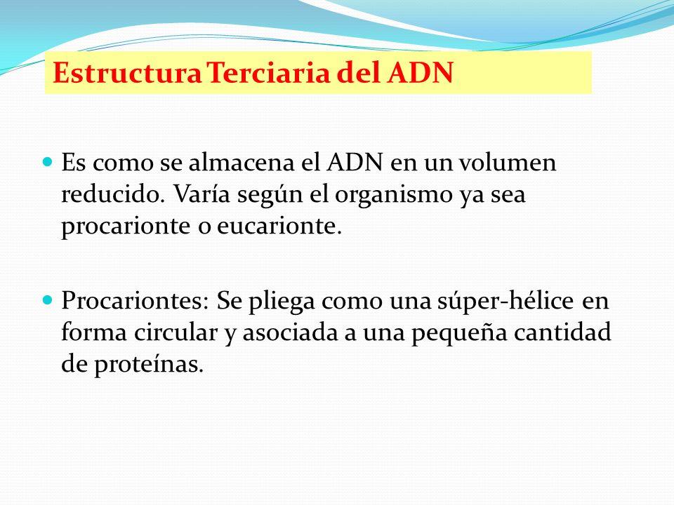 Estructura Terciaria del ADN