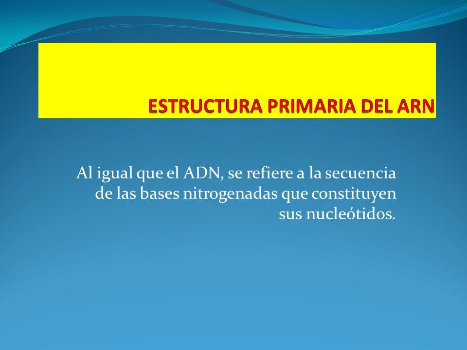ESTRUCTURA PRIMARIA DEL ARN