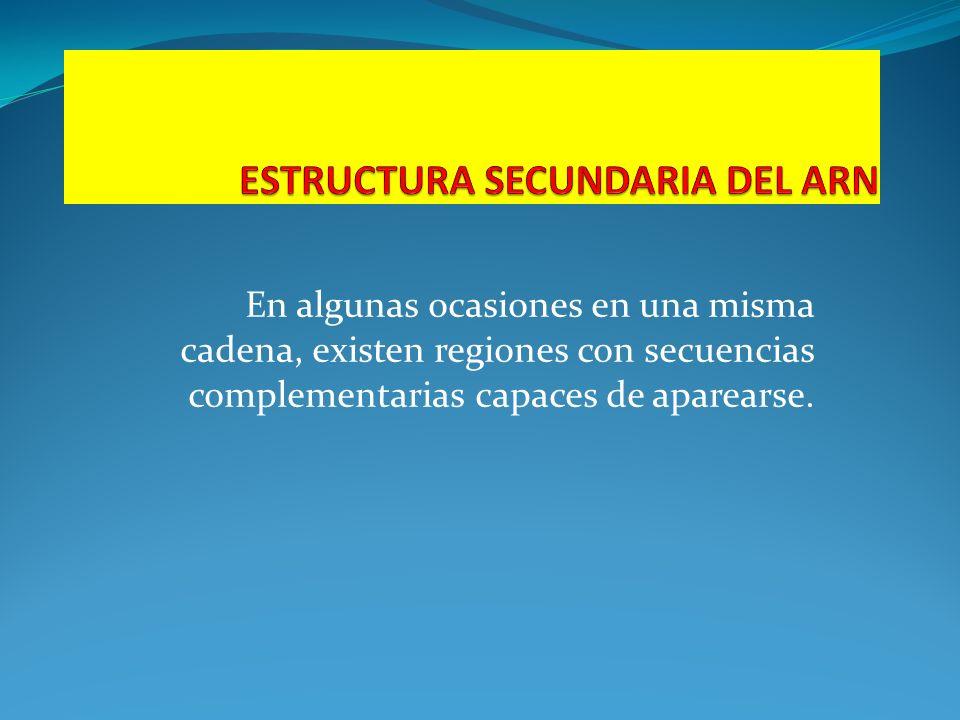ESTRUCTURA SECUNDARIA DEL ARN