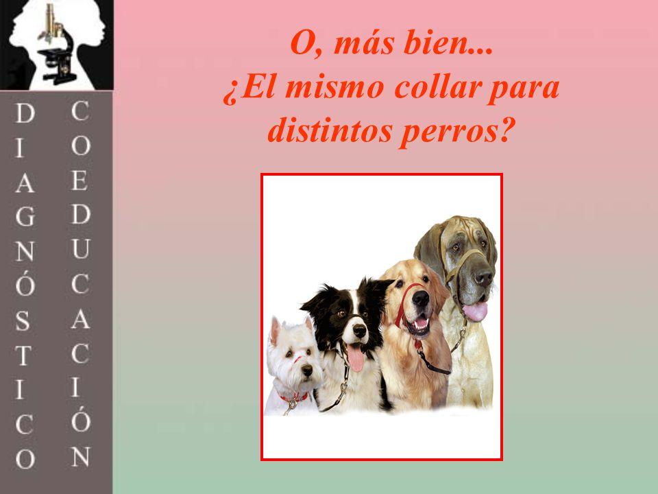 ¿El mismo collar para distintos perros