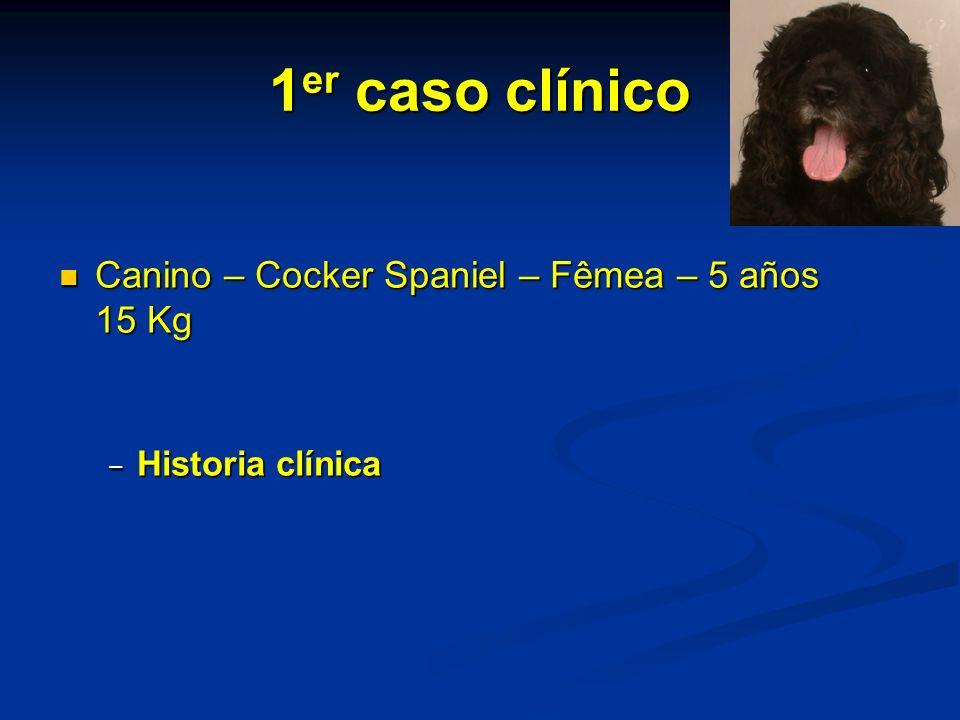 1er caso clínico Canino – Cocker Spaniel – Fêmea – 5 años 15 Kg