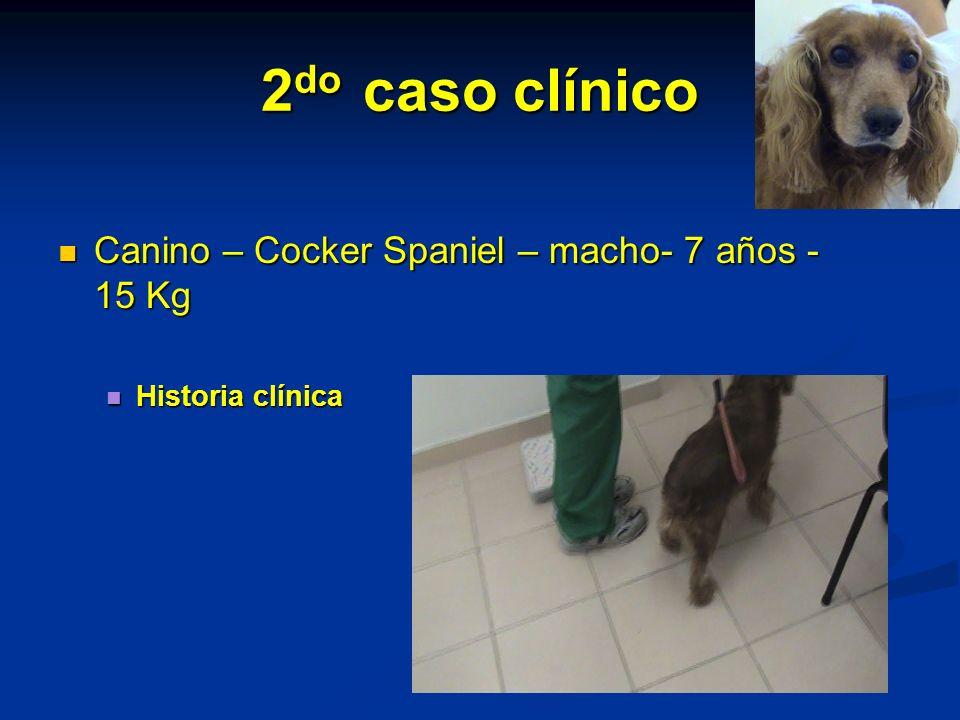 2do caso clínico Canino – Cocker Spaniel – macho- 7 años -15 Kg