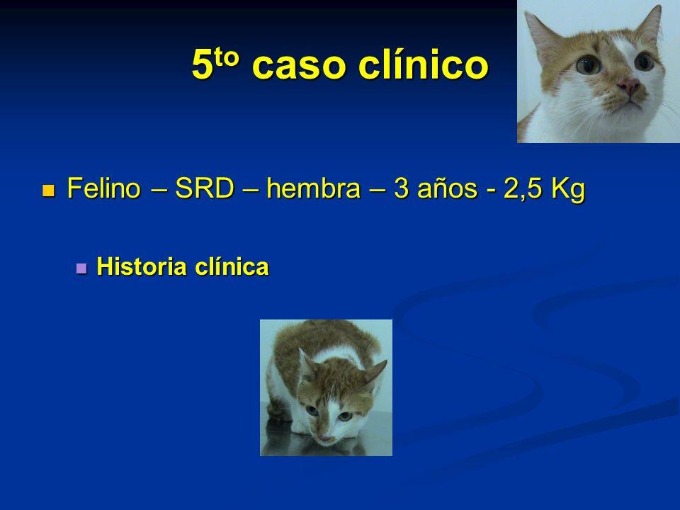 5to caso clínico Felino – SRD – hembra – 3 años - 2,5 Kg