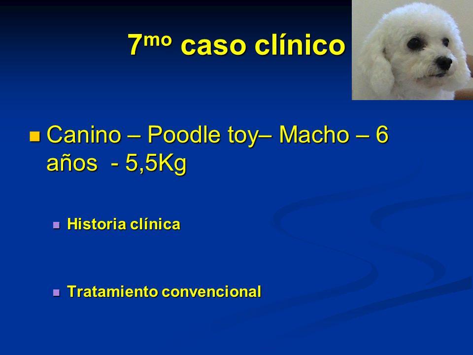 7mo caso clínico Canino – Poodle toy– Macho – 6 años - 5,5Kg