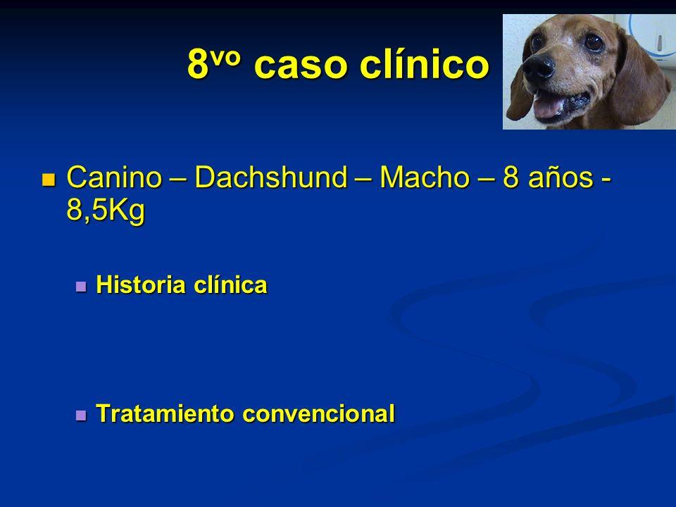 8vo caso clínico Canino – Dachshund – Macho – 8 años - 8,5Kg