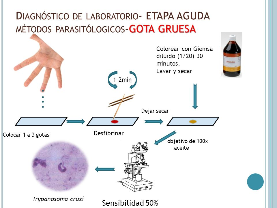Diagnóstico de laboratorio- ETAPA AGUDA métodos parasitólogicos-GOTA GRUESA