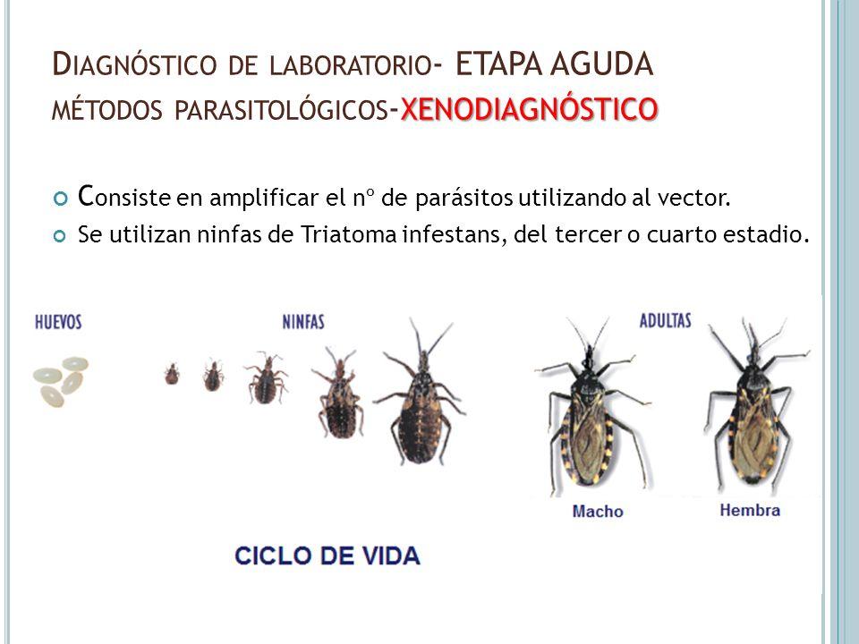 Diagnóstico de laboratorio- ETAPA AGUDA métodos parasitológicos-xenodiagnóstico