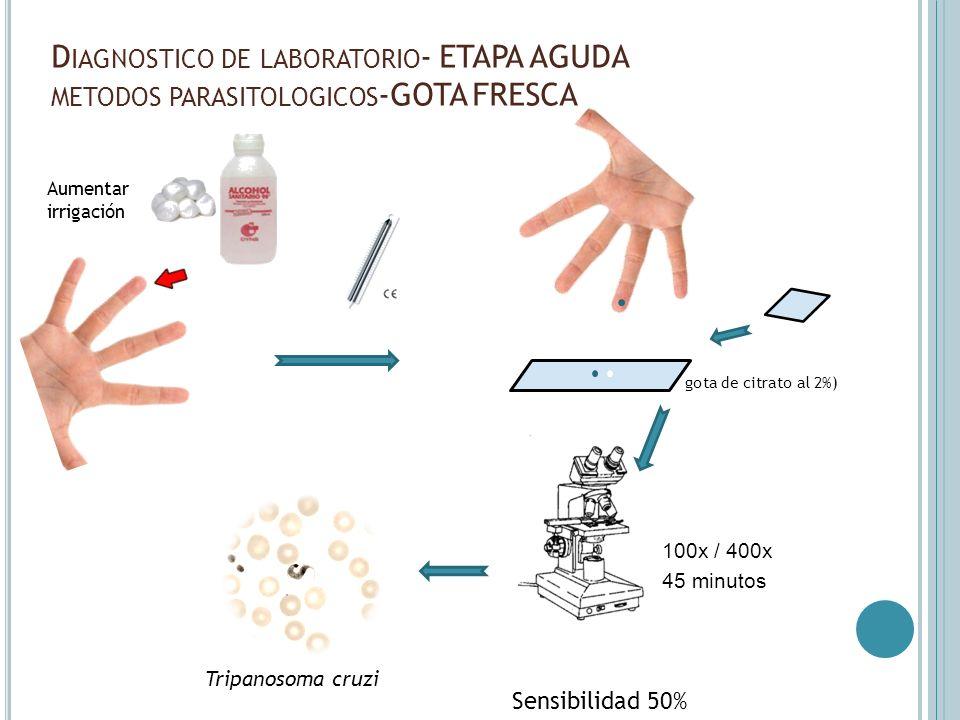 Diagnostico de laboratorio- ETAPA AGUDA metodos parasitologicos-GOTA FRESCA